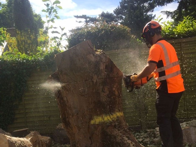 Spelthorne Tree and Garden Services